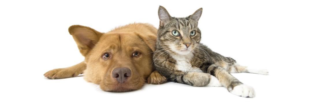 medicatie dieren toedienen