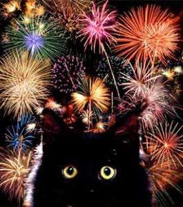 firework-cat