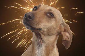 Hond bang voor het vuurwerk